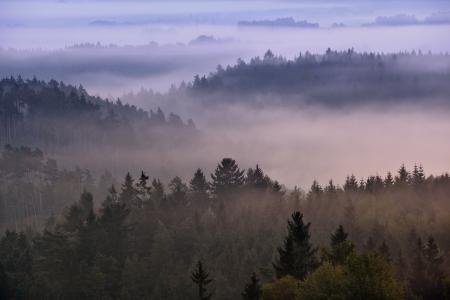 czech switzerland: alba nebbiosa sul parco nazionale boema Svizzera, Repubblica Ceca