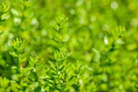 fresh green grass  background with shallow DoF photo