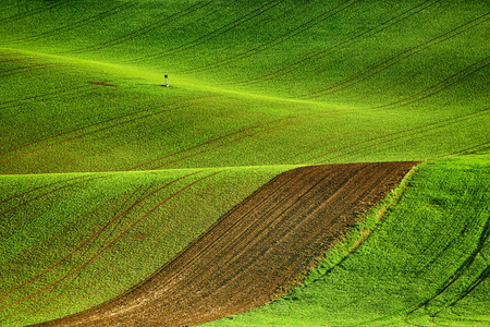 Lines and waves fields, South Moravia, Czech Republic Stock Photo