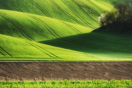 bohemia: Lines and waves fields, South Moravia, Czech Republic Stock Photo