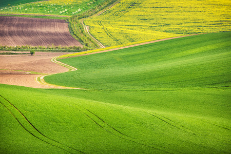 moravia: Road in the green field waves, South Moravia Stock Photo