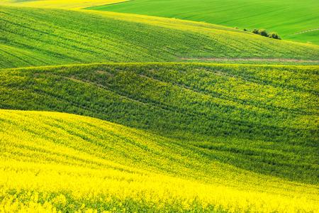 moravia: Rape field waves, South Moravia
