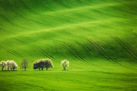 Field waves with blossoming trees in the spring, South Moravia, Czech Republic Stock Photo