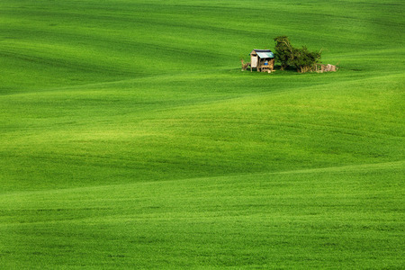 moravia: Field waves with hut, South Moravia