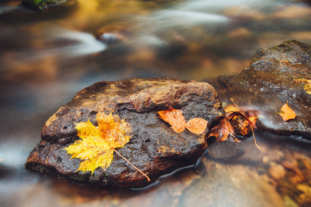 stone in river Kamenice in autumn with long exposure, Bohemian Switzerland, Czech Republic Stock Photo