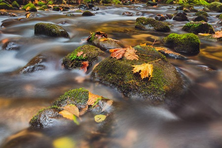 leaves on stones in river Kamenice in autumn with long exposure, Bohemian Switzerland, Czech Republic Stock Photo