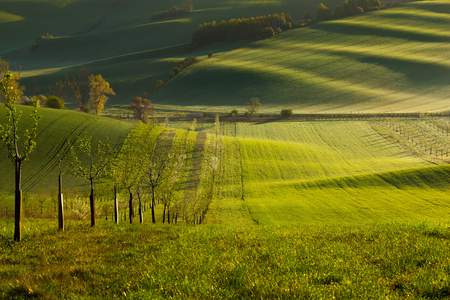 Sunset lines and waves with trees in the spring, South Moravia, Czech Republic Banco de Imagens