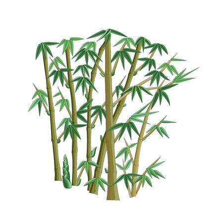 Colorful bamboo traditional plant pattern