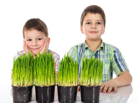 phytology: Happy and serious  boy with fresh green grass. Isolated on white background