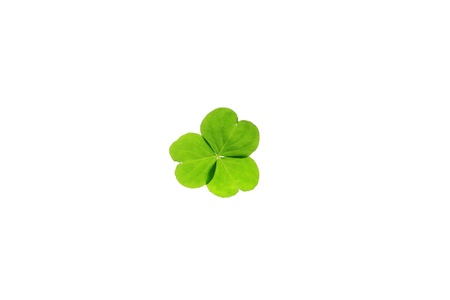 green clover isolated on white  photo
