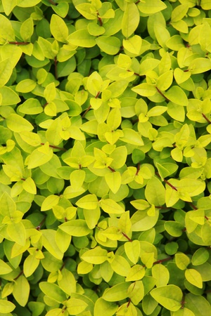 Surrounded by lush plants with leaves photo