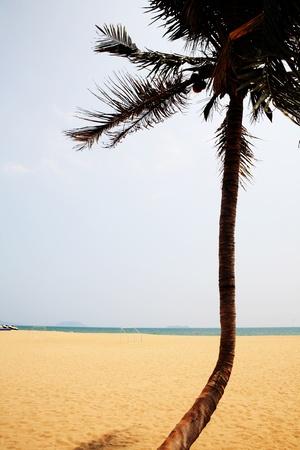 palm beside sea in sanya china Stock Photo - 13463657