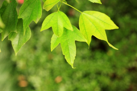 green leaves Stock Photo - 13541004