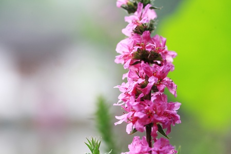 Beautiful flowers bloom in the great outdoors photo