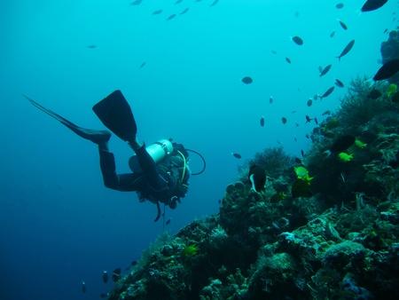 diving in sea 写真素材