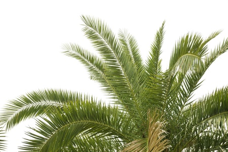 cycadaceae: palm tree Stock Photo