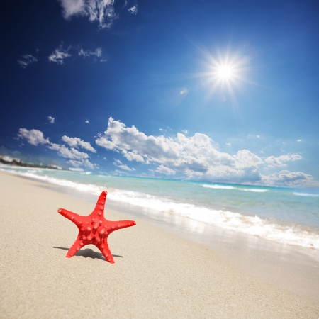 close up red starfish on beach Stock Photo - 16302803