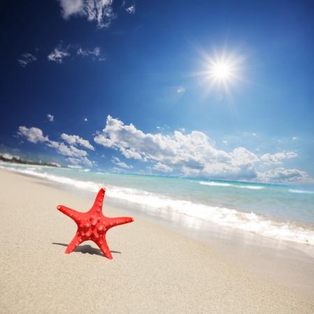 close up red starfish on beach Stock Photo - 16302803
