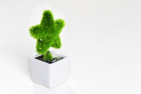 starlike: starlike plant Stock Photo