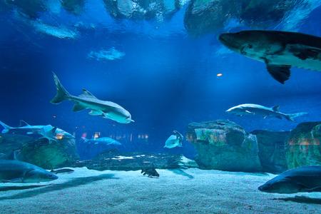 fresh water aquarium fish:  many fishes in aquarium
