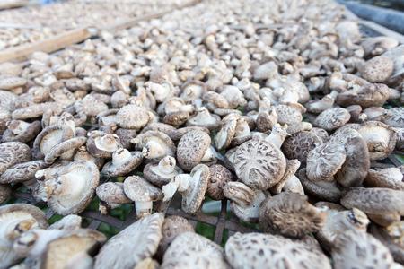 shiitake: Shiitake Mushrooms