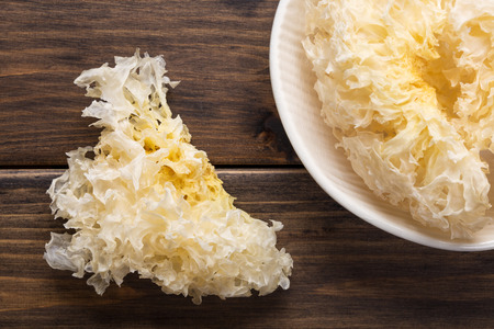 tremella photo
