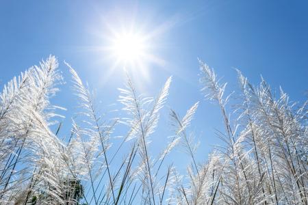 ance: canne bianche e cielo azzurro