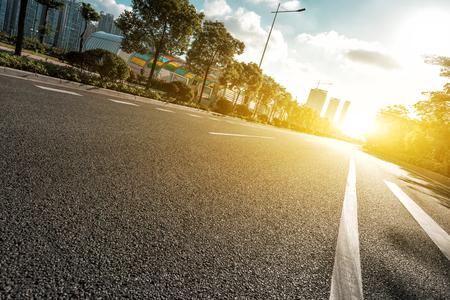 햇살 아래 나무와 빈 아스팔트 도로