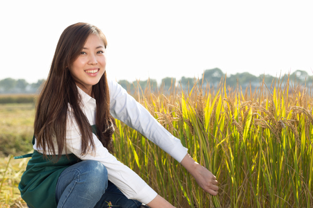 sickle: pretty chinese woman agriculture engineer in golden cereal field