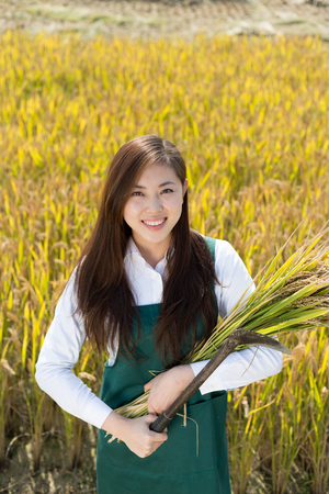 agronomist: pretty chinese woman agriculture engineer in golden cereal field