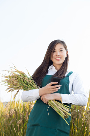 agronomist: young chinese woman agronomist with golden cereal