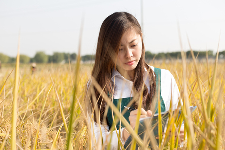 agronomist: pretty young chinese woman agronomist in golden cereal field