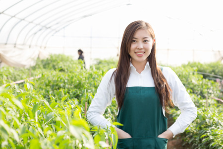 agronomist: young pretty chinese woman agronomist working in green house Stock Photo