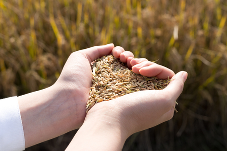hand with cereal seed
