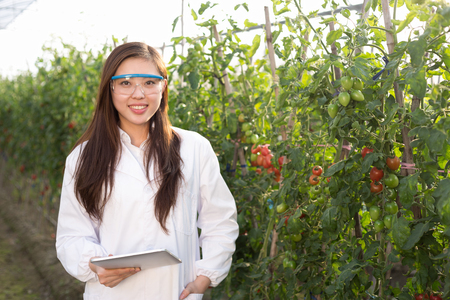 agronomist: young beautiful chinese woman works in green field Stock Photo