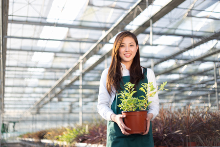 agronomist: young beautiful chinese woman works in modern green house