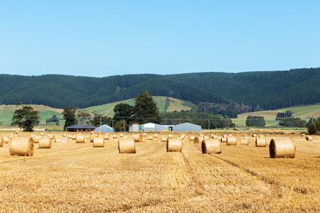 landscape of golden wheat field in summer