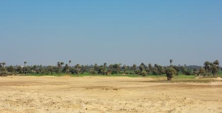 African oasis in desert Sakkara photo
