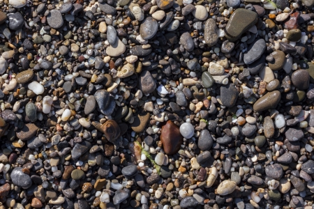 Wet pebble on a beach of the Black Sea. Crimea. Ukraine. photo