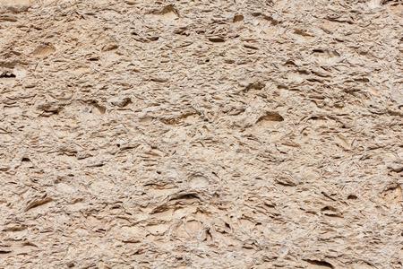 coquina: Superficie de piedra Coquina textura con f�siles