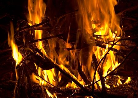 Bright campfire blazes In wood photo