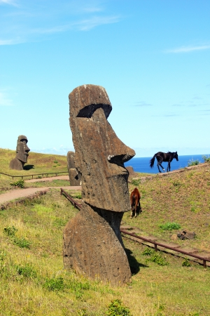 Wild horses next to moai in Rano Raraku national park, Easter island  Stock Photo - 15640372