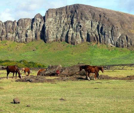 moai: Caballos salvajes pastando junto al moai ca�do, Isla de Pascua Foto de archivo