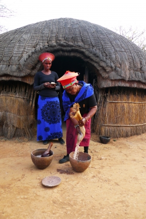 southern africa: ZULULAND, SOUTH AFRICA - SEPTEMBER 14: Zulu woman in traditional closes in Shakaland Zulu Village on September 14, 2009. A unique cultural center built on the set of movies Shaka Zulu and John Ross.