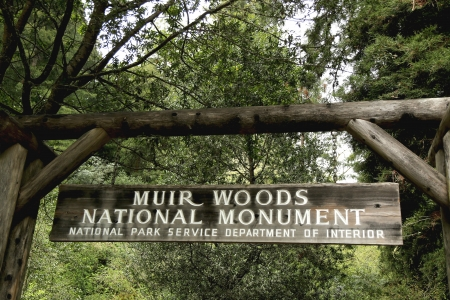 muir: SAN FRANCISCO,CA - MARCH 28  Muir Woods National monument on March 28, 2013  The Muir Woods National Monument is an old-growth coastal redwood forest  Editorial
