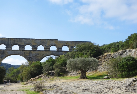 Old olive tree in the front of the Pont du Gard, ancient Roman aqueduct bridge photo