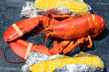 Boiled Maine lobster with corn photo