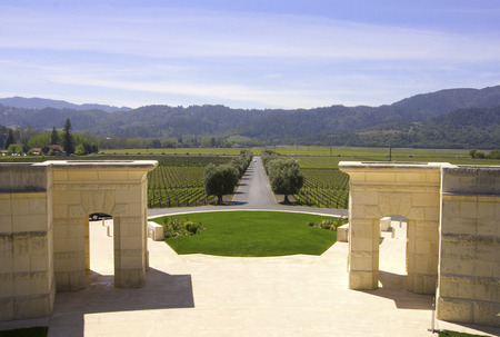 silverado: Typical landscape with rows of grapes  in the wine growing region of Napa Valley Stock Photo