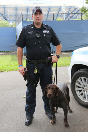 k 9: NEW YORK - SEPTEMBER 8: NYPD transit bureau K-9 police officer and Labrador K-9 Ellis providing security at National Tennis Center during US Open 2014 on September 8, 2014 in New York Editorial