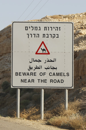 Beware of Camels near the road sign photo
